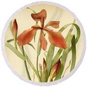 Iris Cuprea Copper Iris.  Round Beach Towel