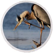 Itchy - Great Blue Heron Round Beach Towel
