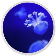 Jelly Fish At The Oceanographic Museum Of Monaco Jacques Cousteau Museum Round Beach Towel