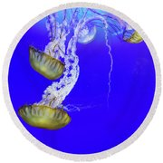 Round Beach Towel featuring the photograph Jellys by Bob Cournoyer