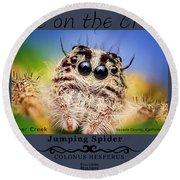 Jumping Spider Colonus Hesperus Round Beach Towel