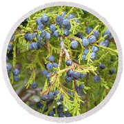 Juniper Berries Round Beach Towel