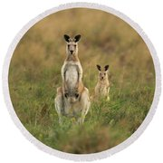 Kangaroos In The Countryside Round Beach Towel