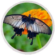 Kite Swallowtail  Round Beach Towel