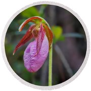 Lady Slipper Orchid Round Beach Towel