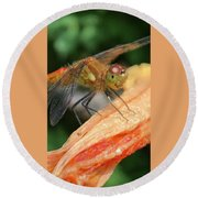 Larry The Dragonfly Round Beach Towel