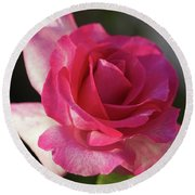 Late October Rose Round Beach Towel