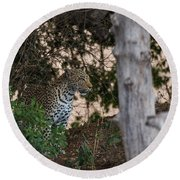 Round Beach Towel featuring the photograph LC1 by Joshua Able's Wildlife