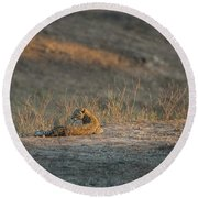 Round Beach Towel featuring the photograph Lc10 by Joshua Able's Wildlife