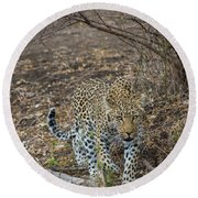 Round Beach Towel featuring the photograph LC2 by Joshua Able's Wildlife