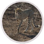 Round Beach Towel featuring the photograph LC3 by Joshua Able's Wildlife