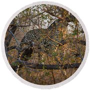 Round Beach Towel featuring the photograph LC6 by Joshua Able's Wildlife