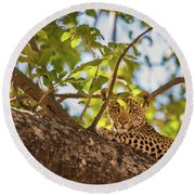 Round Beach Towel featuring the photograph LC9 by Joshua Able's Wildlife