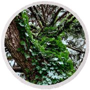Round Beach Towel featuring the photograph Leafy Tree Trunk by Lukas Miller