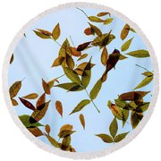 Round Beach Towel featuring the photograph Leaves On Glass by Jon Burch Photography