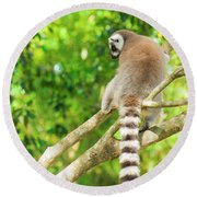 Lemur By Itself In A Tree During The Day. Round Beach Towel