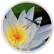 Lily And Dragonfly Round Beach Towel