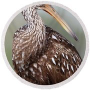 Round Beach Towel featuring the photograph Limpkin by Rick Veldman