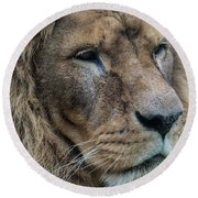 Round Beach Towel featuring the photograph Lion by Anjo Ten Kate