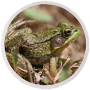 Round Beach Towel featuring the photograph Little Green Frog by William Selander