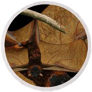 Little Red Flying Fox 2 Round Beach Towel