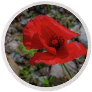 Lone Red Flower Round Beach Towel