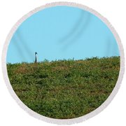 Lonely At The Top Round Beach Towel