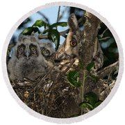 Long-eared Owl And Owlets Round Beach Towel