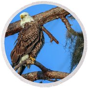 Round Beach Towel featuring the photograph Lookout Eagle by Tom Claud