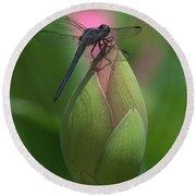Lotus Bud And Slaty Skimmer Dragonfly Dl0006 Round Beach Towel
