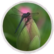 Lotus Bud And Slaty Skimmer Dragonfly Dl0006 Round Beach Towel
