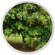 Lychee Ripe For Picking Round Beach Towel