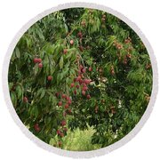 Lychee Tree With Fruit Round Beach Towel