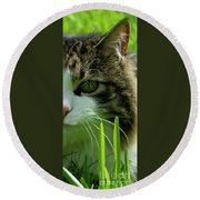 Round Beach Towel featuring the photograph Maine Coon Cat Photo A111018 by Mas Art Studio