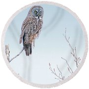 Majestic Great Gray Owl Round Beach Towel