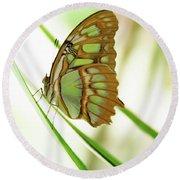 Malachites Butterfly Round Beach Towel