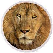 Male African Lion Portrait Wildlife Rescue Round Beach Towel