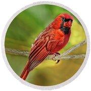 Male Cardinal Headshot  Round Beach Towel