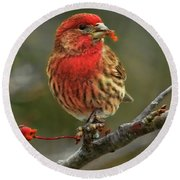Male House Finch With Crabapple Round Beach Towel