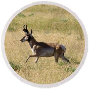 Male Pronghorn On The Go Round Beach Towel