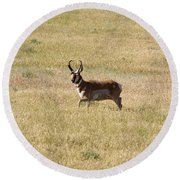 Male Pronghorn On The Move Round Beach Towel