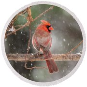 Male Red Cardinal Snowstorm Round Beach Towel