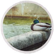Mallard Resting On The Fountain Of The Fallen Angel In The Retiro Park - Madrid, Spain Round Beach Towel