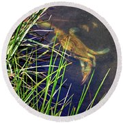 Round Beach Towel featuring the photograph Maryland Blue Crab Lurking In An Assateague Marsh by Bill Swartwout Fine Art Photography