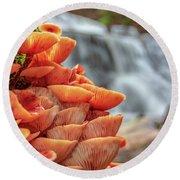 Mcconnell's Mills Mushrooms Round Beach Towel