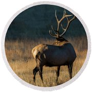 Round Beach Towel featuring the photograph ME3 by Joshua Able's Wildlife