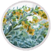 Mexican Echeveria In The  Morning Round Beach Towel
