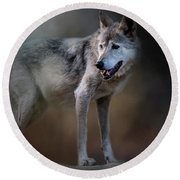 Mexican Wolf Round Beach Towel