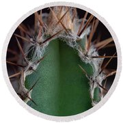 Mini Cactus Up Close Round Beach Towel