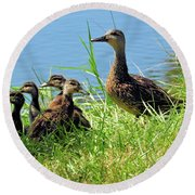 Mom And Baby Ducklings Round Beach Towel